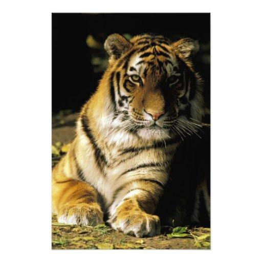 EUA, Michigan, Detroit. Jardim zoológico de Detroi Impressão Fotográficas