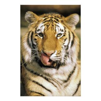 EUA, Michigan, Detroit. Jardim zoológico de Detroi Impressão De Foto