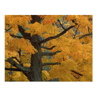 EUA, Michigan, Fim-acima da árvore de bordo do Cartão Postal