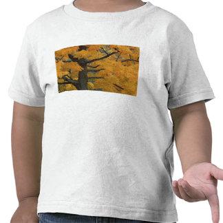 EUA, Michigan, Fim-acima da árvore de bordo do T-shirts
