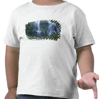 EUA, Oregon, floresta nacional de Willamette. T-shirts
