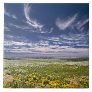 EUA, Oregon, montanha de Steens. O primavera