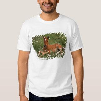 EUA, Oregon, pônei árabe Tshirt