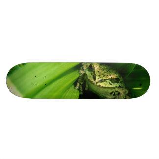 EUA, Oregon, Treefrog no Hellebore falso Skate