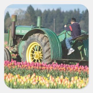 EUA, Oregon, Woodburn, tulipa de madeira dos Adesivo Em Forma Quadrada