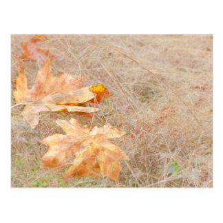 EUA, Washington, Quinault. Folhas de bordo Cartão Postal