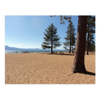 Evergreens de Lake Tahoe Cartão Postal