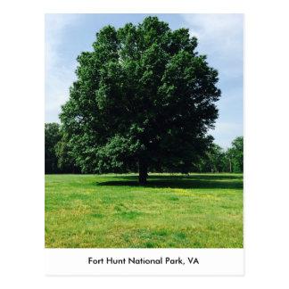 Exemplo de surpreender as árvores @ Ft. Parque Cartão Postal