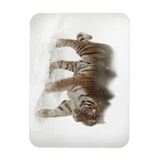 Exposição-animais selvagens tigre-Tigre-dobro Ímã