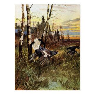 Exposição de acoplamento do galo silvestre preto cartão postal