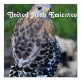 Falcão de United Arab Emirates Impressão