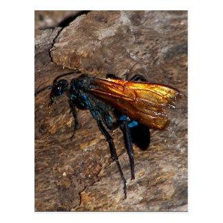 Falcão do Tarantula Cartão Postal