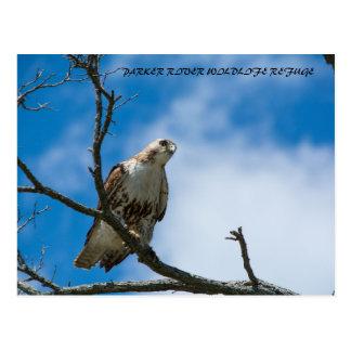 Falcão no cartão da caça