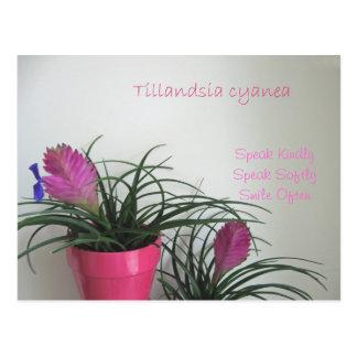 Fale o cartão cor-de-rosa amável do Quill