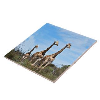 Família do girafa azulejo quadrado grande