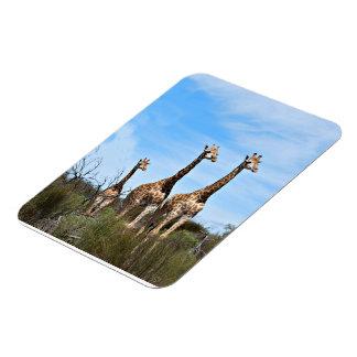 Família do girafa ímã