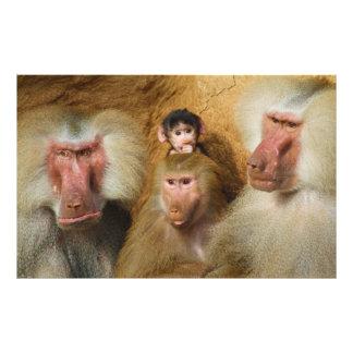 Família do jardim zoológico da água de Colônia de Impressão De Fotos
