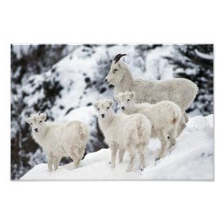 Família feliz dos carneiros arte de fotos