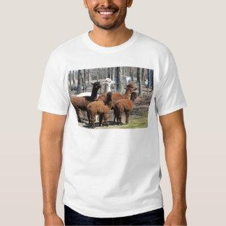 Família peruana da alpaca - pacos do Vicugna Tshirt
