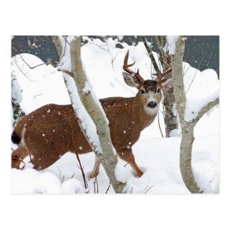 Fanfarrão dos cervos na neve no inverno cartão postal