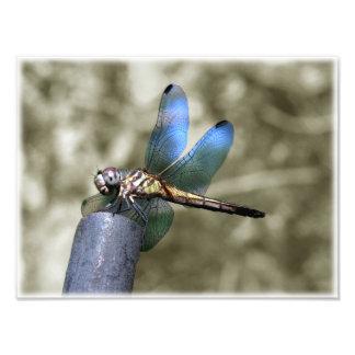 Fantasia da libélula impressão de foto
