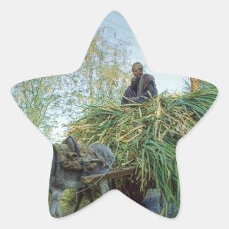 farmer-photo-18500-856601.jpg adesito estrela