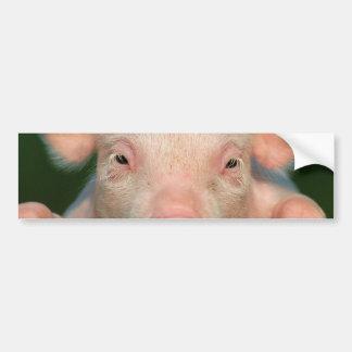 Fazenda de porco - cara do porco adesivo para carro