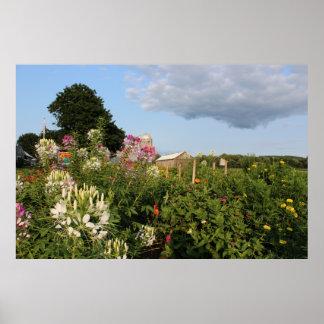 Fazenda do verão pôsteres