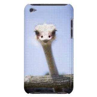 Feche acima da cabeça da avestruz capa para iPod touch