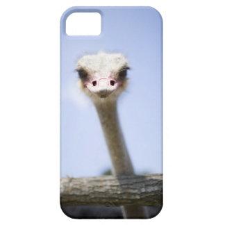 Feche acima da cabeça da avestruz capas para iPhone 5