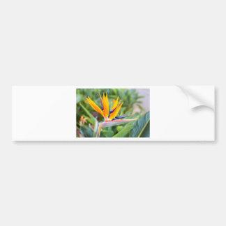 Feche acima da flor do guindaste ou do reginaei do adesivo de para-choque