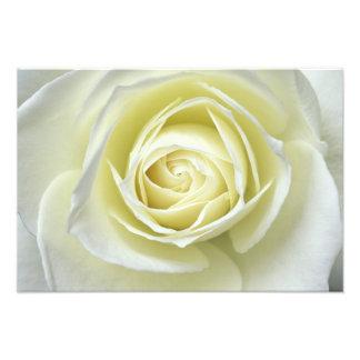 Feche acima dos detalhes do rosa branco fotografia