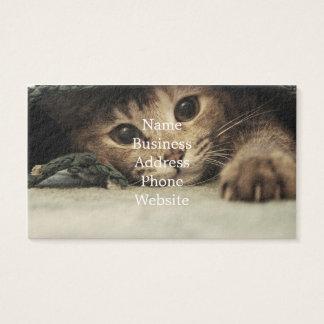 Feche acima dos olhos de gatos de um gato malhado cartão de visitas
