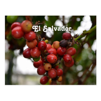 Feijões de café de El Salvador
