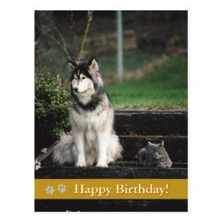 Feliz aniversario! - cartão do cão & do gato cartões postais