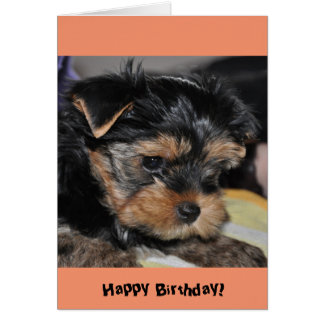 Feliz aniversario! Cartão do yorkshire terrier