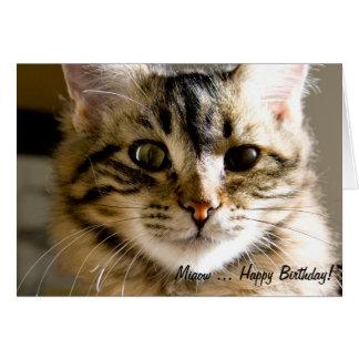 Feliz aniversario de Miaow…! Cartão Comemorativo