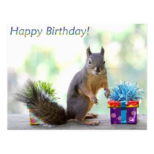 Feliz aniversario do esquilo! cartoes postais