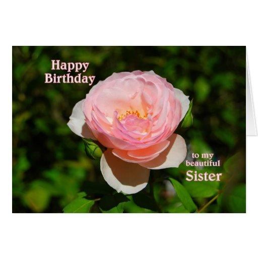 Feliz aniversario do rosa do rosa à irmã cartao