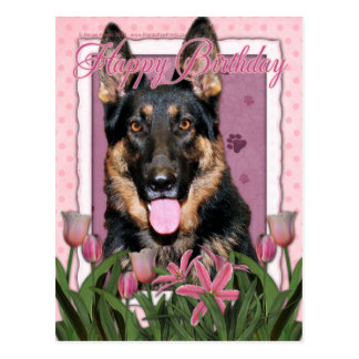 Feliz aniversario - german shepherd - Kuno Cartão Postal
