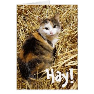 Feno! É seu cartão do gato de Bithday