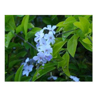 Festa tropical da flor - Flores Azules Cartão Postal