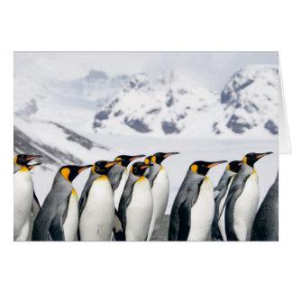 Fileira do rei pinguins - cartão de nota