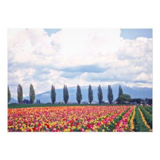 Fileiras de flores misturadas das tulipas convite personalizados