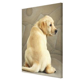 Filhote de cachorro amarelo de labrador retriever impressão em tela