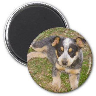 Filhote de cachorro azul de Heeler Ímã Redondo 5.08cm
