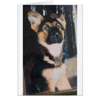 Filhote de cachorro bonito do german shepherd cartão