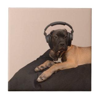Filhote de cachorro Bullmastiff