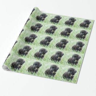 Filhote de cachorro da caniche de brinquedo papel de presente