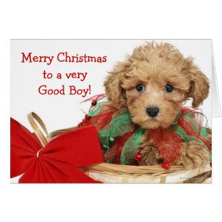 Filhote de cachorro da caniche que senta-se na cartão comemorativo